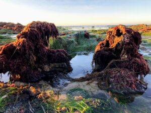 intertidal zone south la jolla shores beach