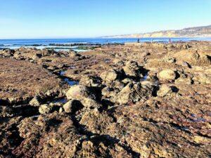 la jolla underwater park tide pools low tide