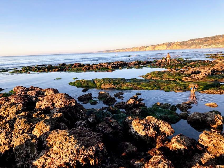 south tidepools la jolla underwater park