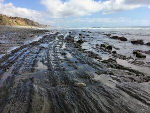 Monterey shale san onofre bluffs beach