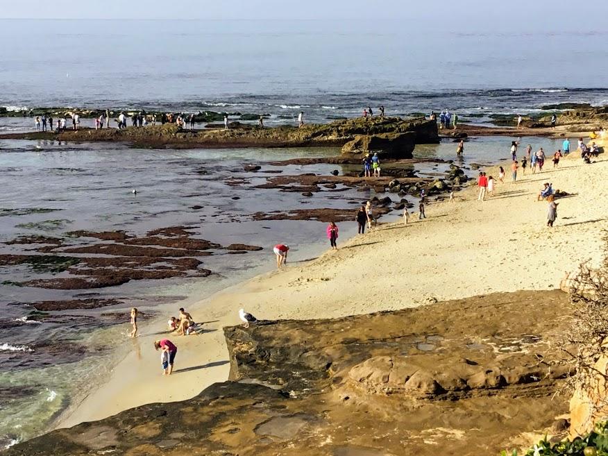 November 2018 point mencinger la jolla low tide