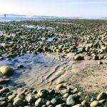 Old Mans low tide king tide