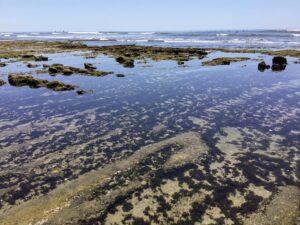 terramar beach tidepools king tide san diego