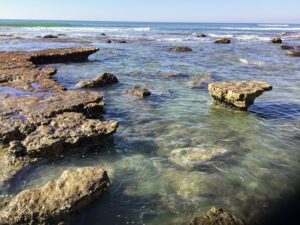 torrey pines monterey formation ocean water