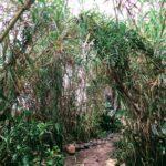 old mans garden shower plants