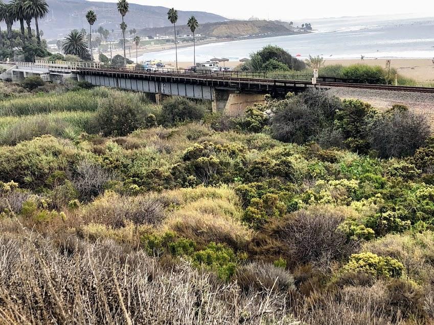 Coastal sage scrub middles trestles san onofre