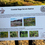 Coastal sage scrub sign sunset cliffs natural park