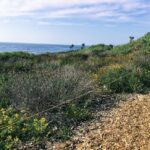 coastal sage scrub sunsent cliffs natural park
