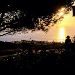 torrey pine tree gliderport torrey pines state beach