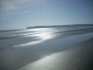 coronado dog run beach wet sand ocean