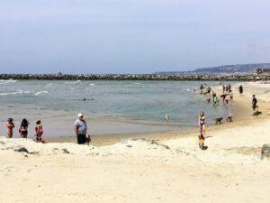 dog beach ocean beach grunion run 2021