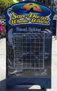 san diego whale watching tours schedule mission bay