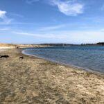 running dogs hidden anchorage fiesta island