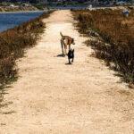 walking dogs dirt trail sage scrub water