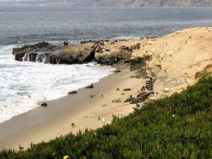 point la jolla california sea lions