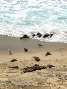 waves sea lion
