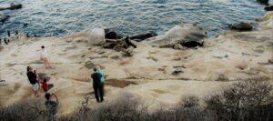 la jolla sea lions rocks water la jolla