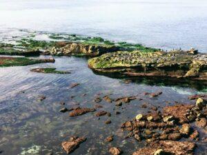 sea lions la jolla low tide water