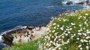 seal rock custom california sea lions