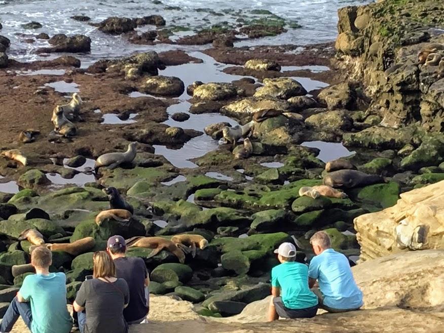 The point la jolla people california sea lions