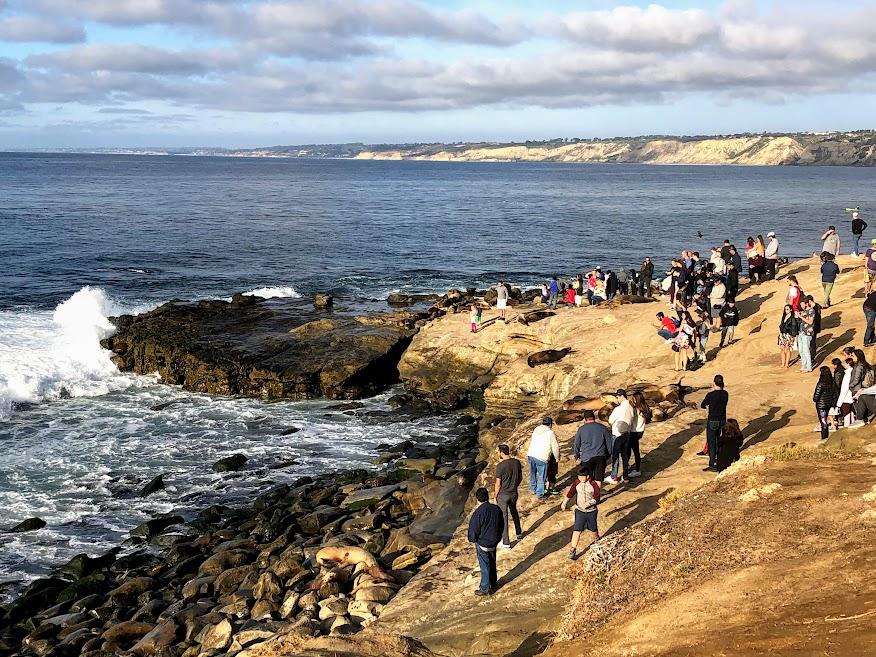 la jolla point 1 1 2020 people sea lions