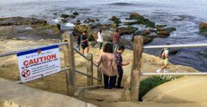 point la jolla stairs sea lion rookery