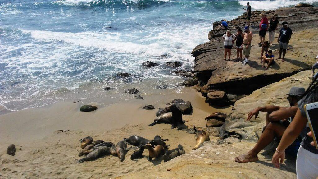 sea lions people la jolla san diego