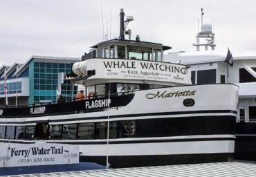 flagship whale watching san diego bay