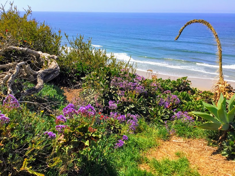 South-Del-Mar-Beach
